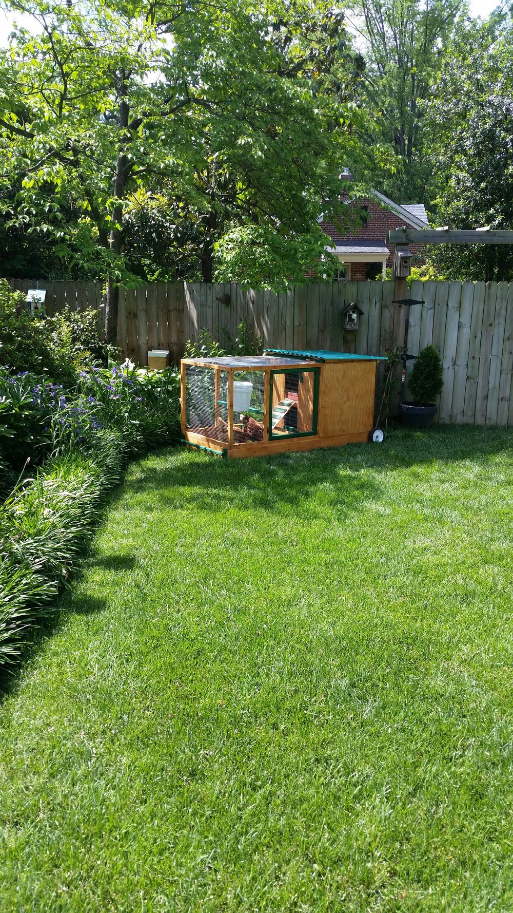 Stained Coop in Yard.JPG