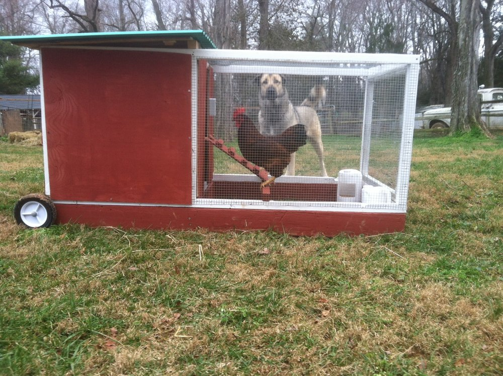 Dog and Chicken Coop.JPG