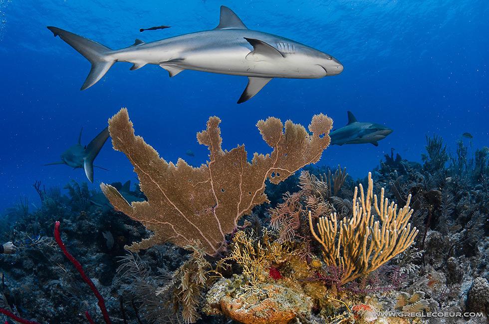shark reef 2.jpg