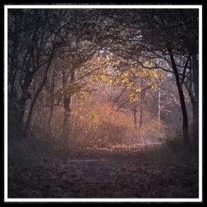 autumn-backlit-branch-226721.jpg