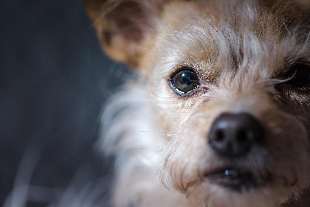 Dogzweb-4.jpg