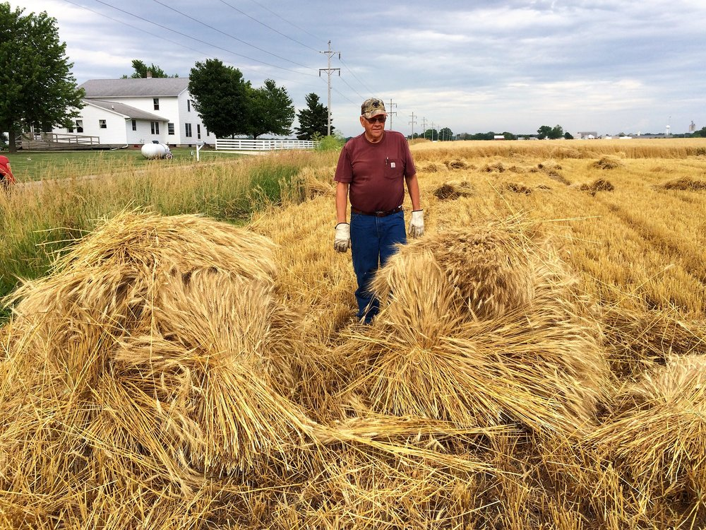 Levi Yoder demonstrates how to stack the sheaves into shocks for drying in the field.