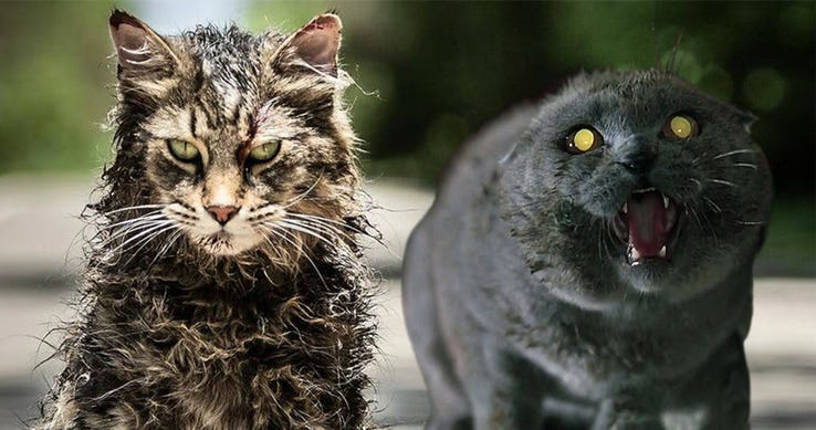 pet-sematary-church-the-cat-differences-feature.jpg