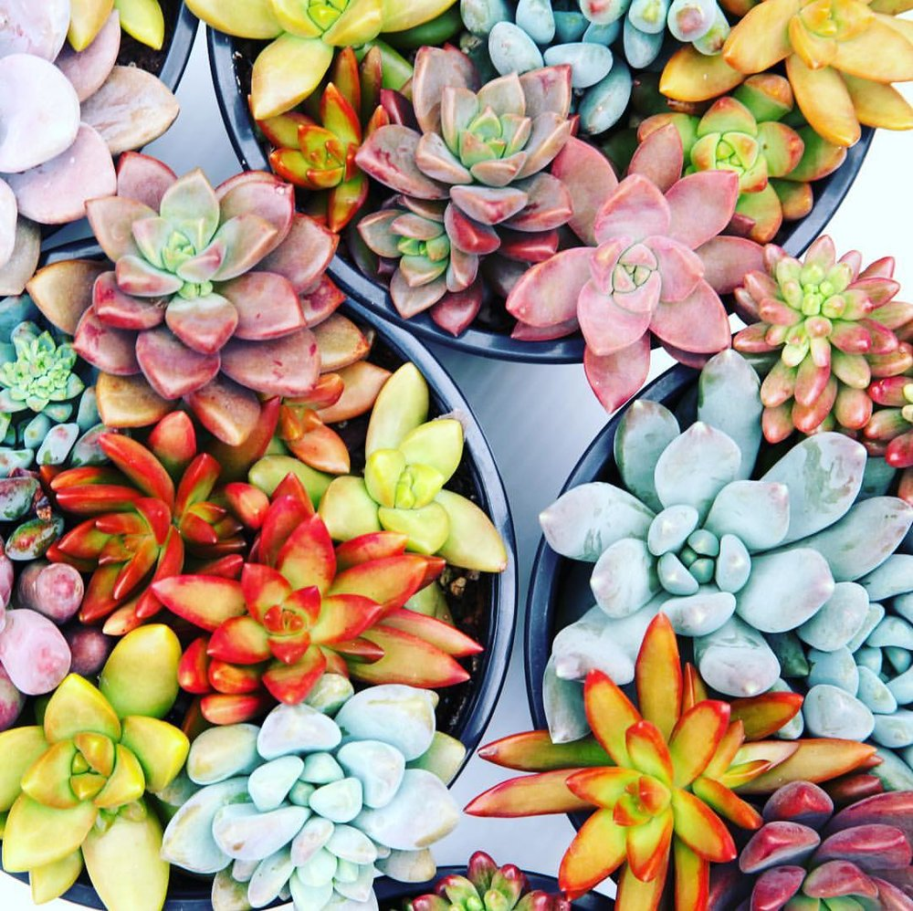 Leaf & Clay - Premium succulents delivered right to your front door!