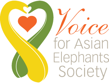 Voice for Asian Elephants Society - Voice for Asian Elephants Society's mission is to end elephant slavery and protect the endangered Asian elephants that are being captured illegally from the wild.  We will achieve our mission by educating people about the plight of captive elephants, employing strategic actions to rescue them and operating transition homes where they can roam freely until they are relocated into the wild.Please donate today. :)