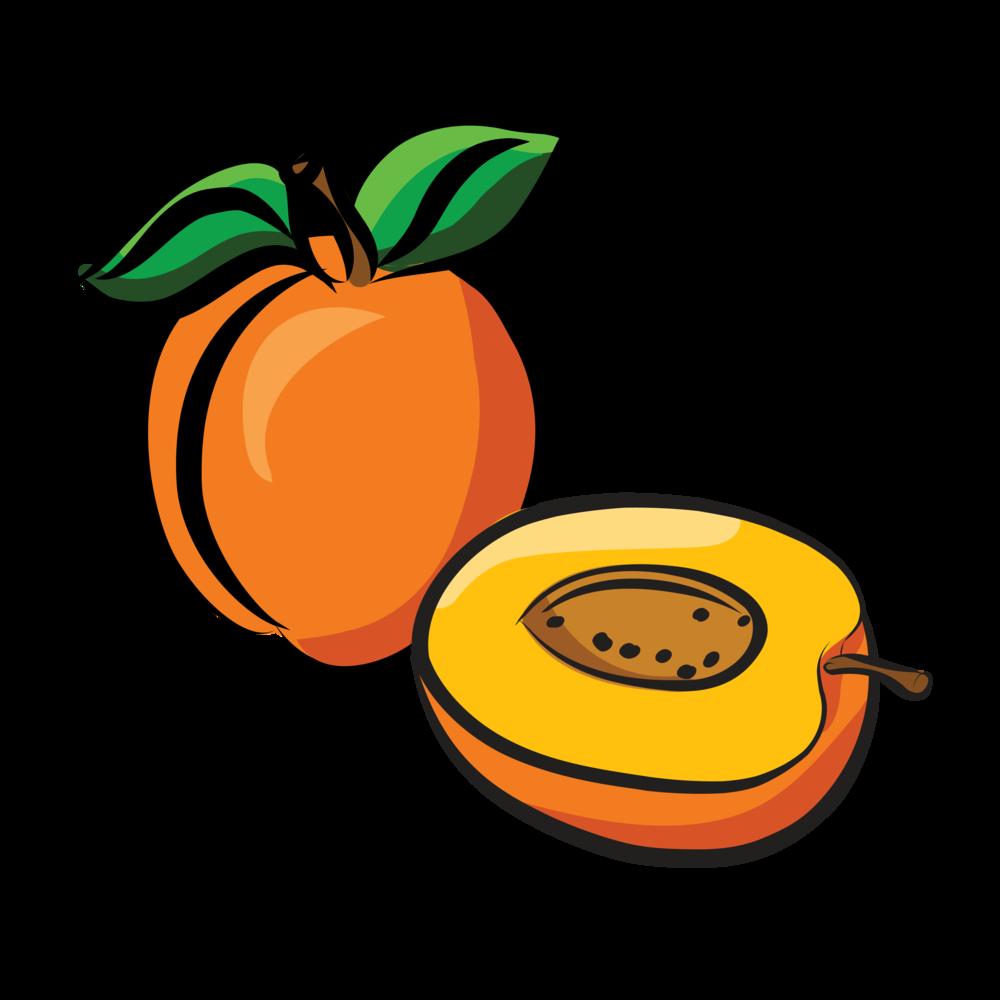 Apricot_rgb-01.png