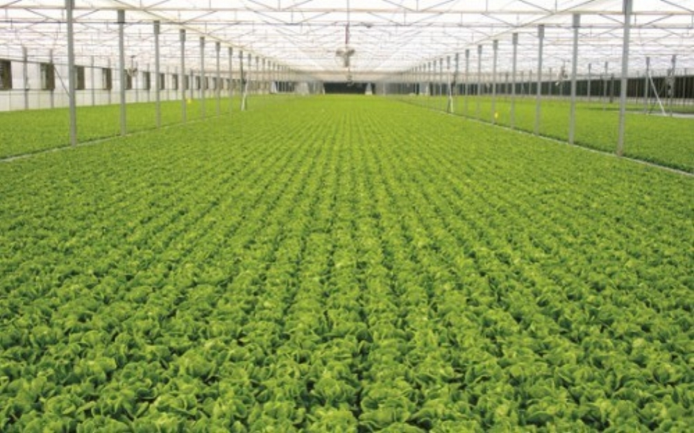 Ngành nông nghiệp hiện đại của Israel khiến cả thế giới ngưỡng mộ (Ảnh: Growponics)