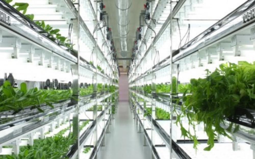 """Mô hình canh tác trong nhà kính khiến nông dân """"phát sốt"""" (Ảnh: Printerest)"""