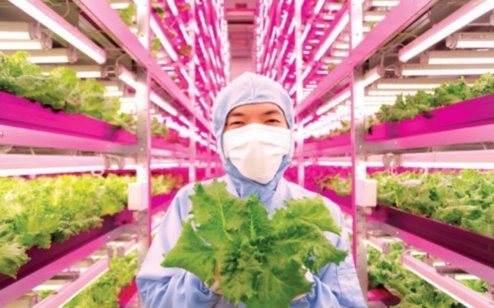 Nông nghiệp công nghệ cao biến nông dân thành tỷ phú (Ảnh: modernfarmer.com)