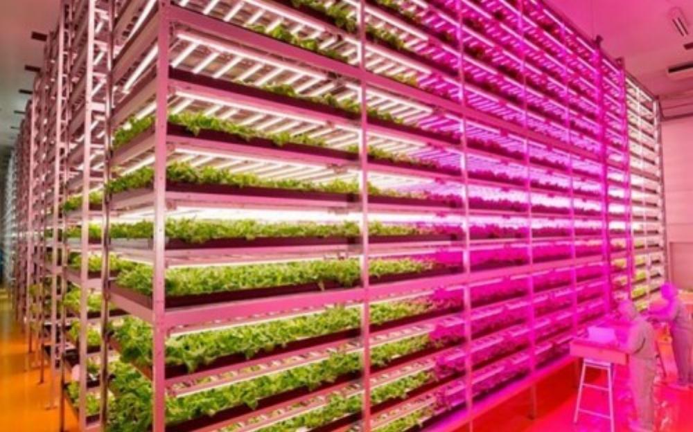 Các giống cây trồng được nghiên cứu, thử nghiệm trước khi đem nhân rộng (Ảnh: Maytech)