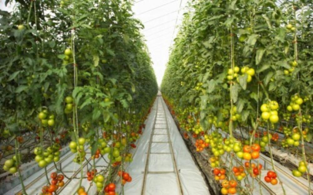 Ứng dụng công nghệ cao là hướng đi mới trong phát triển nông nghiệp hiện đại (Ảnh: TechRepublic)