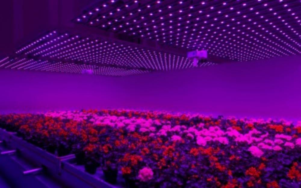 Đèn led được sử dụng trong canh tác nông nghiệp (Ảnh: TechRepublic)