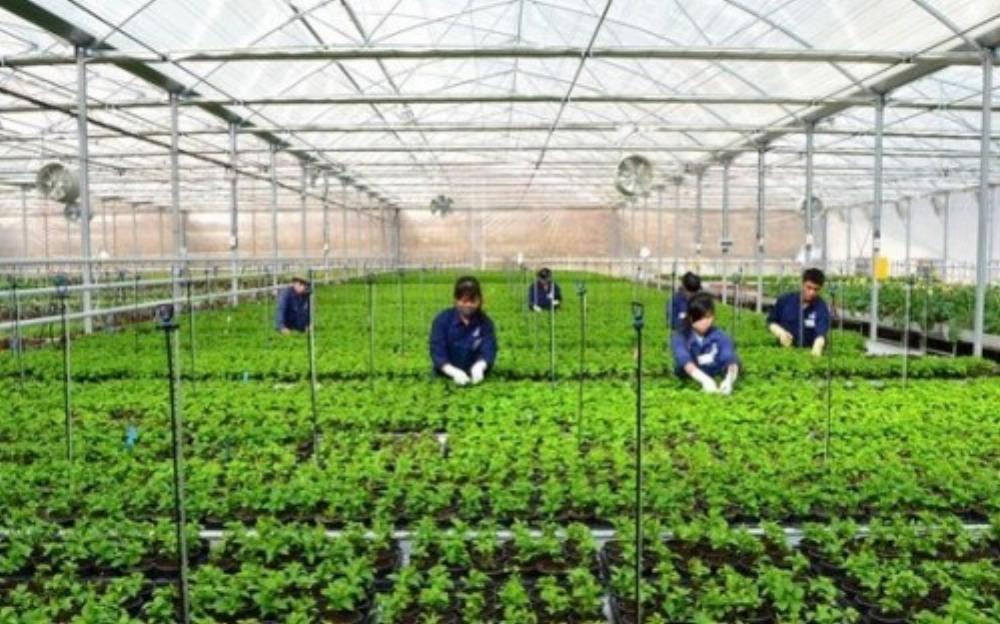 Nông dân Việt Nam cũng khá thành công với mô hình ứng dụng công nghệ cao trong nông nghiệp (Ảnh: KT)