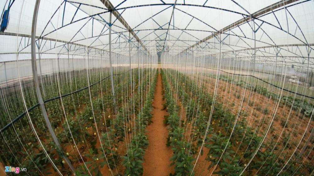 Vườn nhà anh Nguyễn Định, nơi đầu tiên thử nghiệm trồng thành công giống dưa hấu mini Pepino (hay còn còn là dưa hấu Nam Mỹ).