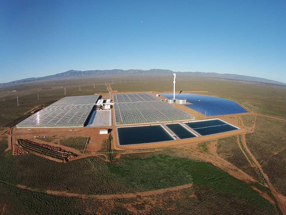 Trang trại nông nghiệp công nghệ cao Sundrop, Australia. Ảnh: Sundrop Farm