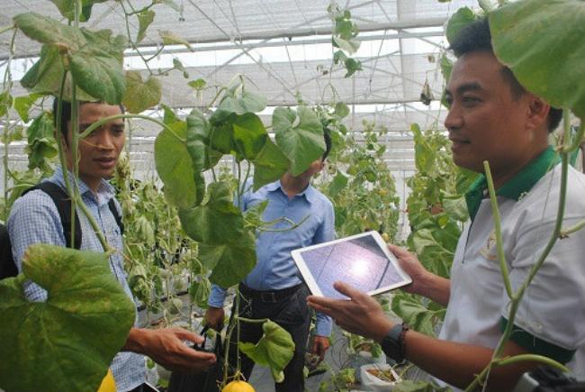 Các doanh nghiệp khởi nghiệp nông nghiệp rất cần quỹ đất để sản xuất.