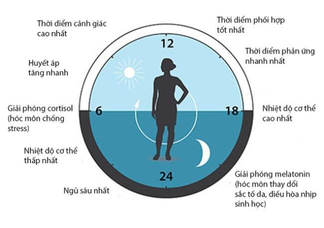 'Thời khóa biểu' hoạt động của cơ thể người - Nguồn: NobelPrize.org