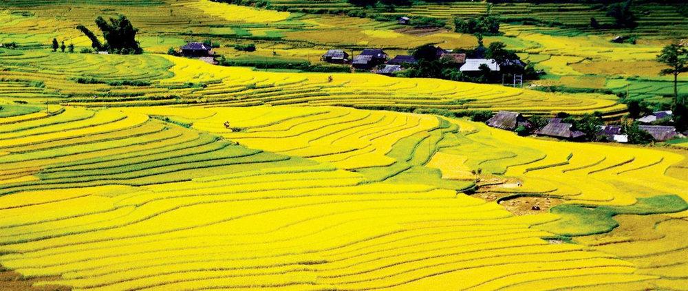 Việt Nam: Thừa gạo nhưng chi tỉ đô nhập ngô -