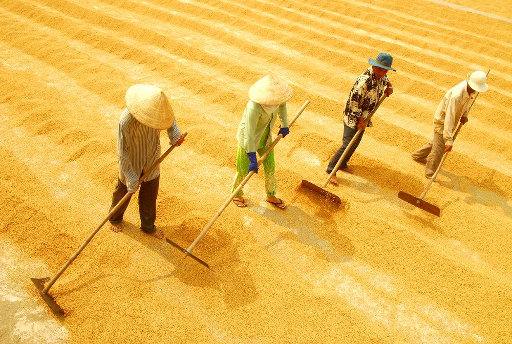 8.4-Xuất-cảng-gạo-của-Việt-Nam-đang-rối-Anh.jpg