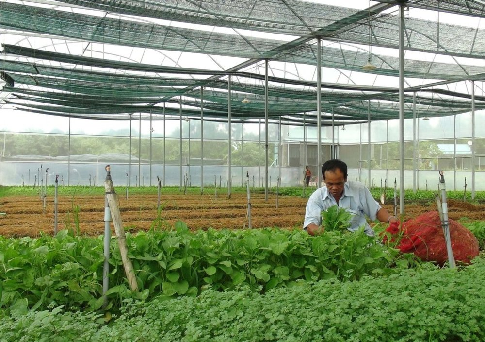 Sản xuất rau sạch trong nhà kinh tại khu Nông nghiệp công nghệ cao ở thị xã Ninh Hòa. (Ảnh: Nguyên Lý/TTXVN)