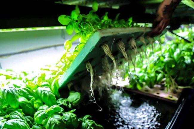 metropolis-farms-7.jpg