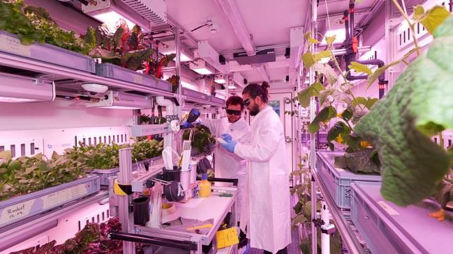 EDEN-ISS-greenhouse-plants.jpg