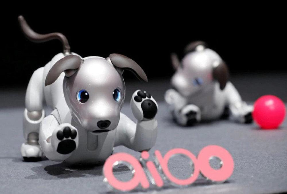 cho-robot-cua-sony-reuters-1509527069970.jpg