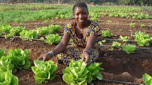 - Một ví dụ điển hình như hệ thống tưới nhỏ giọt mang tên Tipa sau khi áp dụng ở Senegal đã giúp cho các nhà nông Senegal thu hoạch 3 vụ/năm thay vì 1 vụ như trước đây, kể cả trên những vùng đất khô cằn nhất.