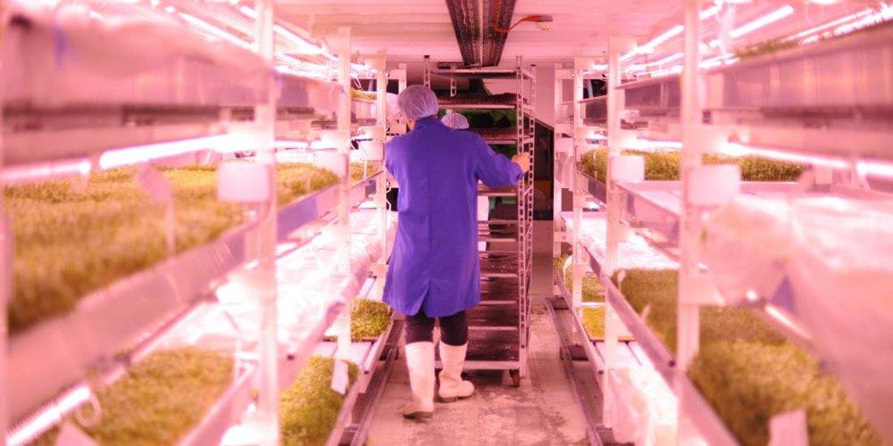 - Đèn LED được thiết kế phát sáng ở bước sóng tối ưu cho cây trồng, có thể điều chỉnh chu kì ngày và đêm từ đó kích thích cây phát triển nhanh hơn.