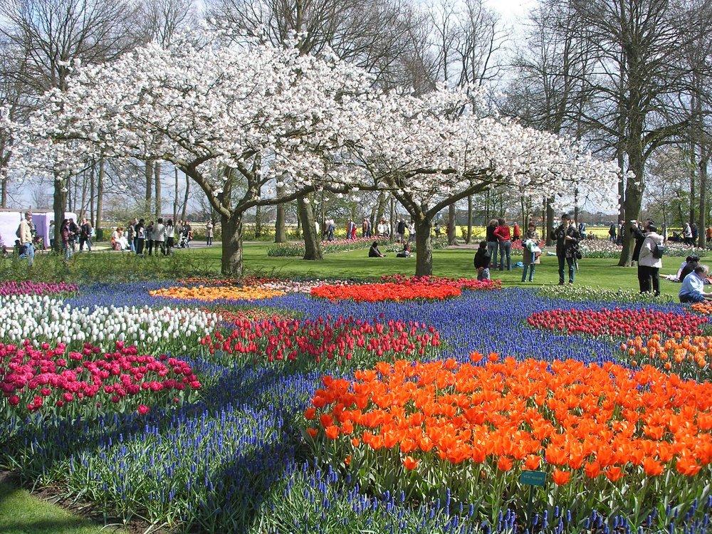 - Vườn hoa này rộng 32 héc-ta, trồng gần 7 triệu cây hoa tulip, với trên 100 giống khác nhau