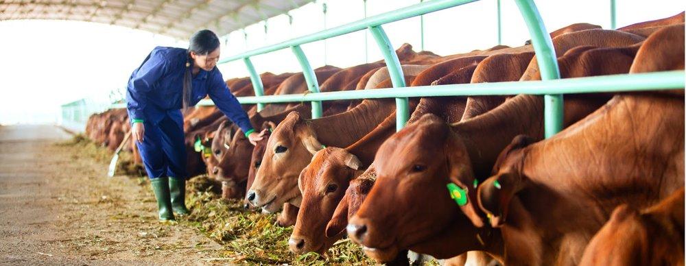 - Hoàng Anh Gia Lai với kế hoạch đến năm 2018 dành 20.000ha trồng cây ăn quả, lượng bò thịt là trên 100.000 con và bò sữa là 20.000 con.