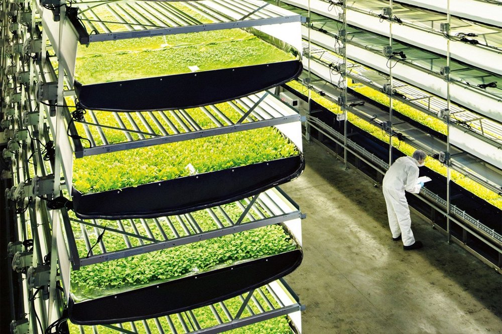 - Trang trại này được xây dựng tại một nhà máy cũ ở New York với 35 luống rau được bố trí xếp chồng lên nhau trong vỏn vẹn 6400 mét vuông.