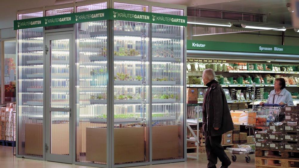 - Tại khu trưng bày, siêu thị dựng một vườn thẳng đứng mang tên Kräutergarten với chiều dài 3,2 mét. Cây được trồng theo phương pháp thủy canh và được xếp theo chiều dọc trong một môi trường được kiểm soát cẩn thận.