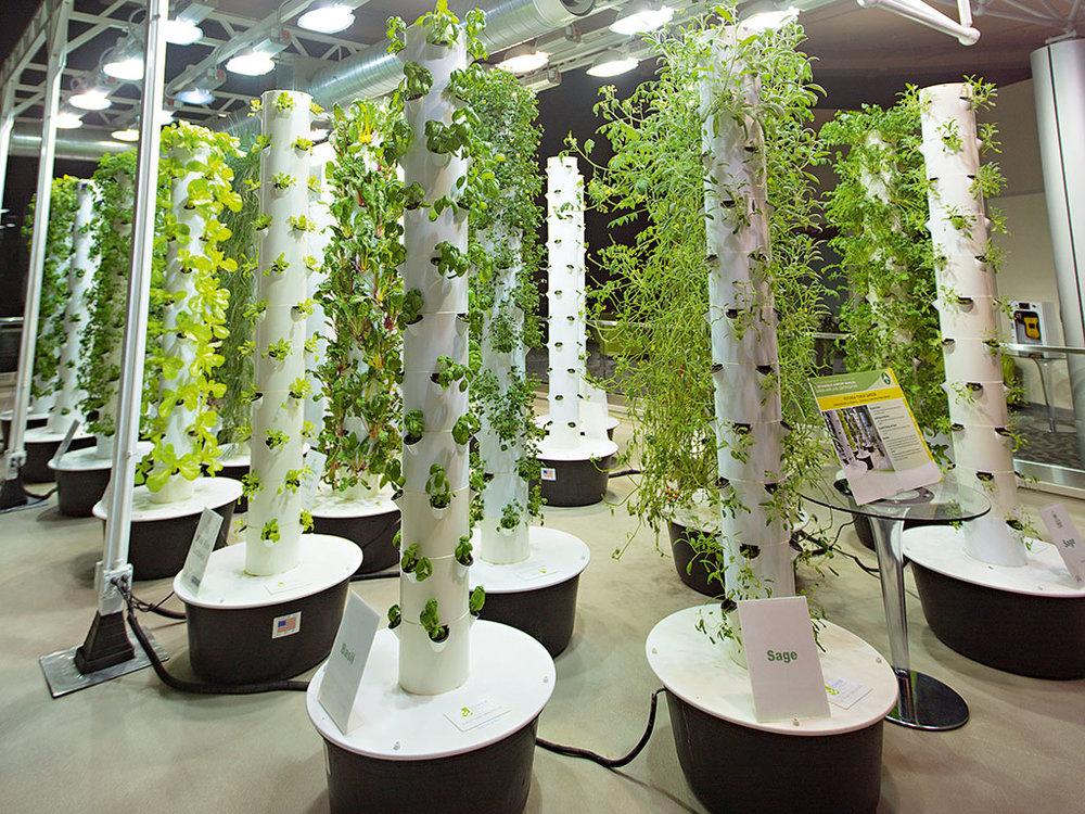 - Mỗi chậu rau có thể cho thu hoạch 2-3 bó rau, nếu gia đình 4 người thì chỉ sau 4 tháng, chi phí tiết kiệm được từ việc trồng rau sạch có thể hoàn lại số tiền ban đầu bỏ ra để lắp đặt mô hình trồng rau theo cách này.