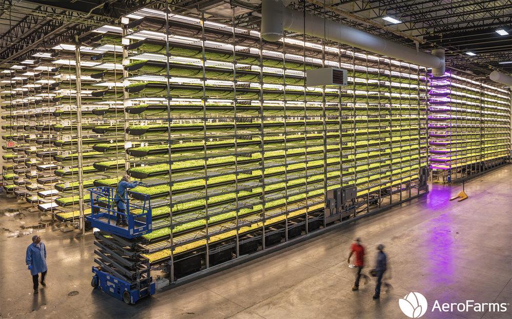 Aero Farm - Mỹ -
