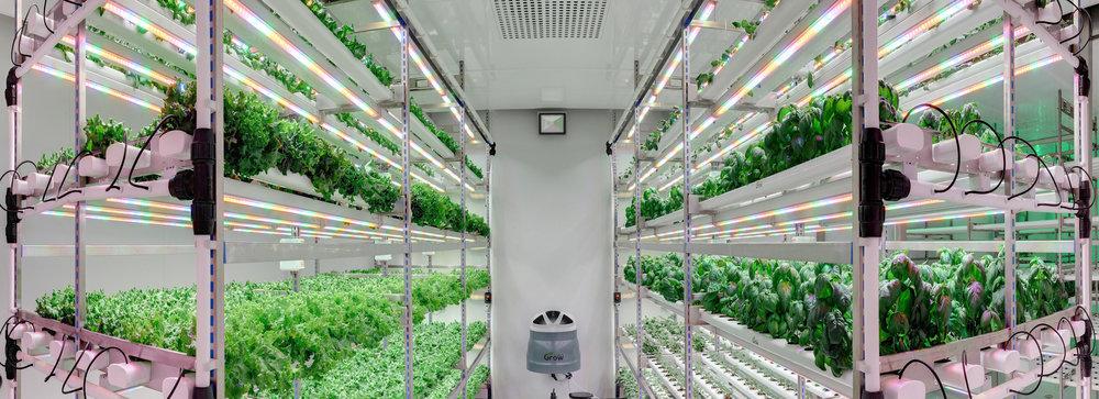 - Ở giữa mỗi dãy, người ta lắp đặt những chiếc quạt nhỏ để cung cấp oxy cho cây, các khay đều được phun dưỡng chất định kì và luôn được theo dõi bằng máy cảm biến để đảm bảo quá trình phát triển bình thường, không sâu bệnh.