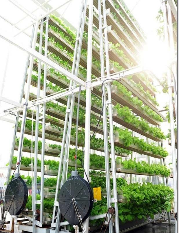 - Toàn bộ hệ thống gồm 120 tháp rau như vậy, với 3000 cây trồng, có thể sản xuất ra 2 tấn rau xanh hàng ngày mà chỉ tốn diện tích gần 700 mét vuông. Hiện này A Go - Grow đang có kế hoạch nhân rộng thành 2.000 tháp rau trong vài năm tới để phục vụ nhu cầu rau sạch cho người dân Singapore.