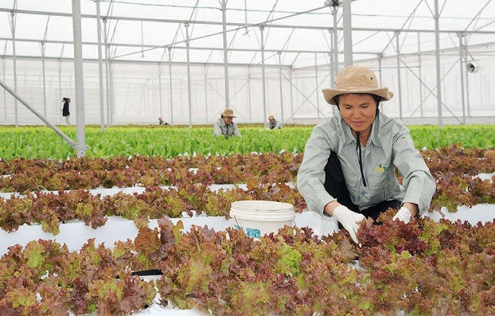 Sản xuất nông nghiệp ứng dụng công nghệ cao tại nông trường VinEco Hà Nam (huyện Phủ Lý, Hà Nam). Ảnh: THANH HÀ