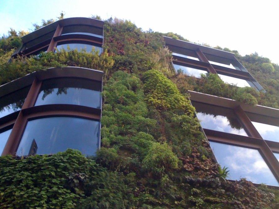 """- Sở dĩ, tường cây được mệnh danh là """"lá phổi xanh của đô thị"""" bởi chúng không những tạo ra một không gian trong lành, thoáng mát mà còn tận dụng được diện tích chật hẹp tại các thành phố lớn."""