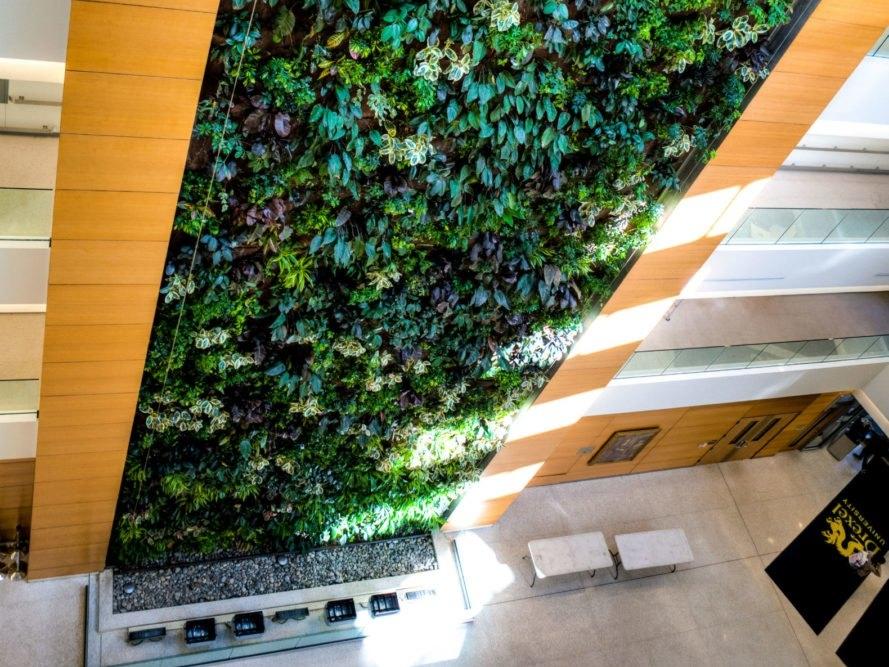 - Tường cây với nhiều tán lá xanh mát hoạt động như một bộ lọc không khí tự nhiên, thanh lọc các chất đôc hại, cải thiện chất lượng không khí cho chính ngôi nhà của bạn, thậm chí là cả thành phố.