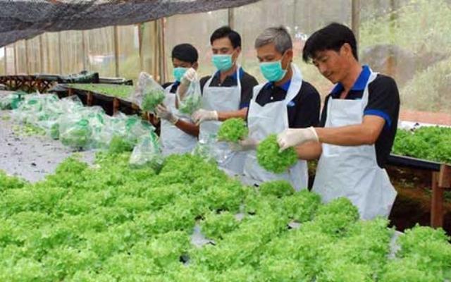 Nhiều doanh nghiệp Nhật Bản quan tâm tới đầu tư phát triển nông nghiệp công nghệ cao tại Việt Nam. Ảnh: HNM
