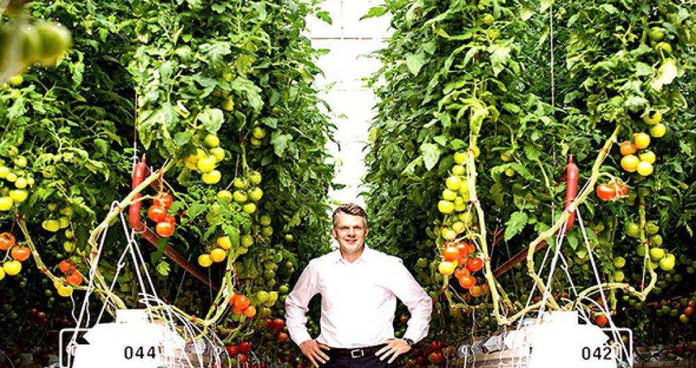 CEO Philipp Saumweber của Sundrop Farms giữa những luống cà chua thủy canh.
