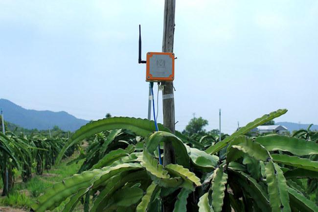 Sản phẩm của Mimosa TEK được gắn tại trang trại trồng thanh long. Ảnh: Lan Anh