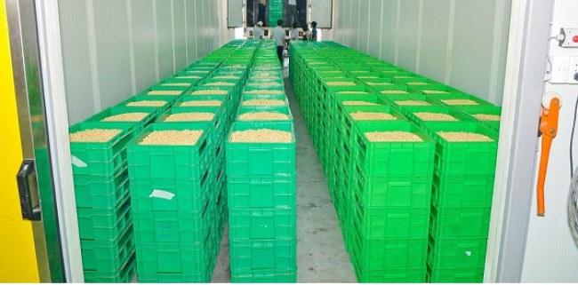 Nông sản được bảo quản trong môi trường kiểm soát gắt gao về nhiệt độ và nồng độ oxy.