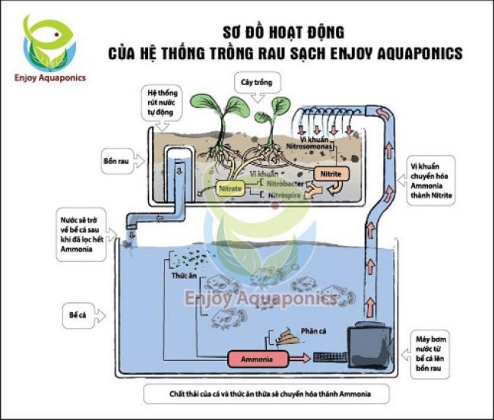 Sơ đồ hoạt động của Enjoy Aquaponics (Nguồn: enjoylife.vn)