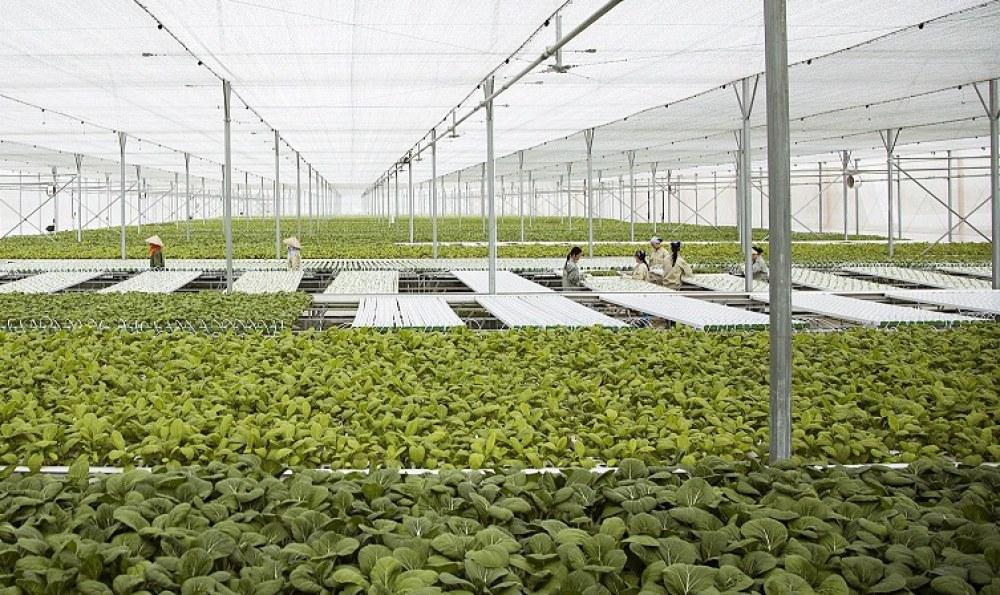 Nhiều mô hình tưới tiết kiệm được sử dụng phát triển các trang trại rau an toàn - Ảnh: VGP/Đỗ Hương