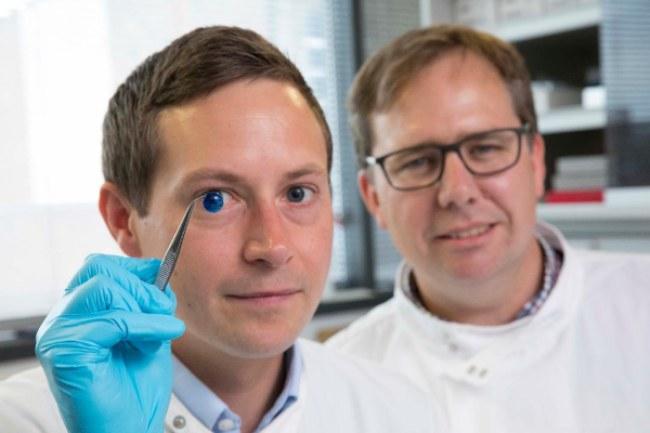 Giác mạc cấy ghép nhân tạo được tạo ra từ công nghệ in 3D với nguyên liệu là một chất gel chiết xuất từ rong biển và collagen. Ảnh: Newcastle University.