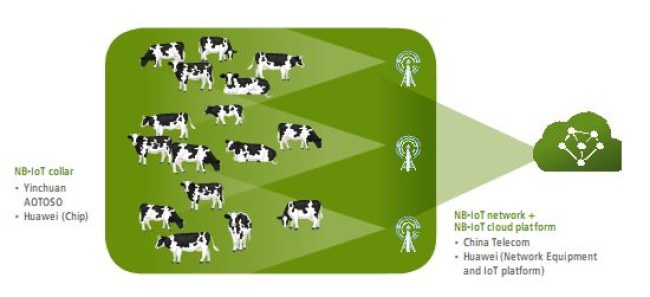 Mô hình chăn nuôi bò sữa UCOWS (Nguồn: Huawei)
