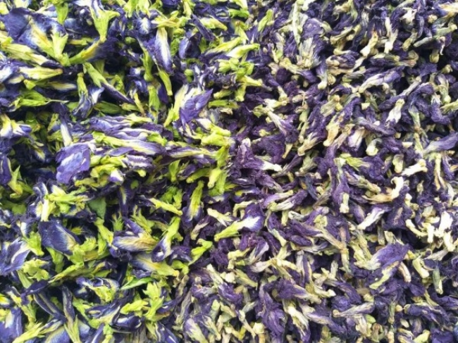 Hoa đậu biếc sấy bẫy nhiệt (trái) và phơi nắng (phải)