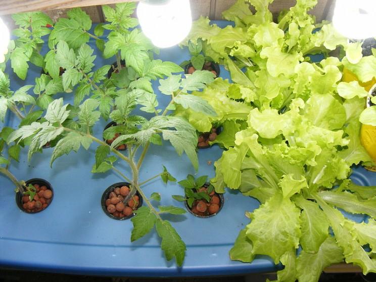 2. Aeroponics - Khí canh, trồng cây không cần đất và rất ít nước -